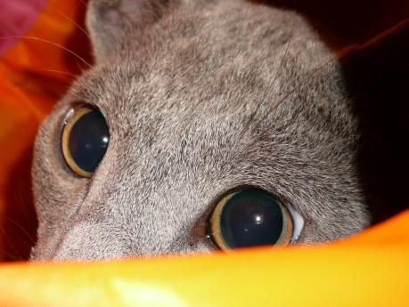 らぃちゃんの目の色。