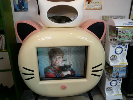 ねこテレビの上にねころん!!