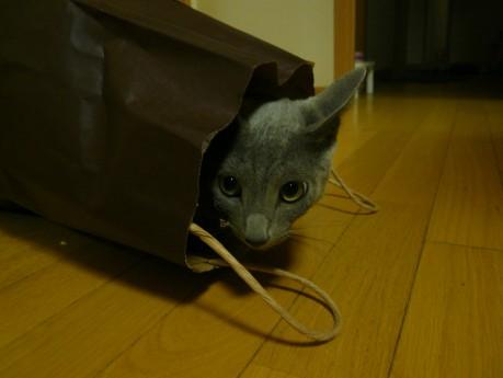 紙袋ダイスキ・・・