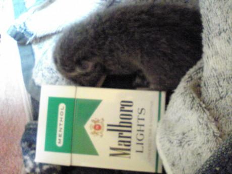 タバコと同じくらい!!