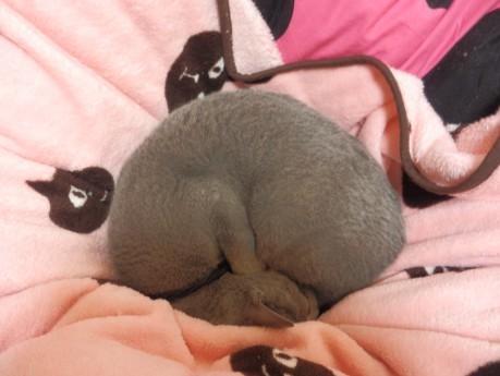 ダンゴ虫ではなく猫です・・・
